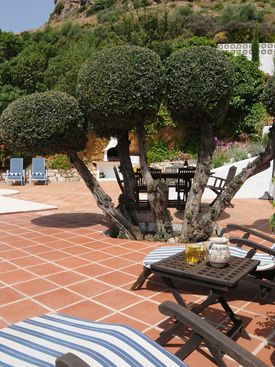 Bonsai olive trees at Los Patos